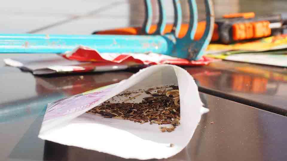 semillas-agropecuaria-federadiove