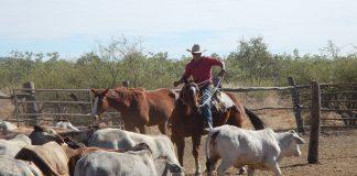 ganaderos-producción-venezuela-federadiove