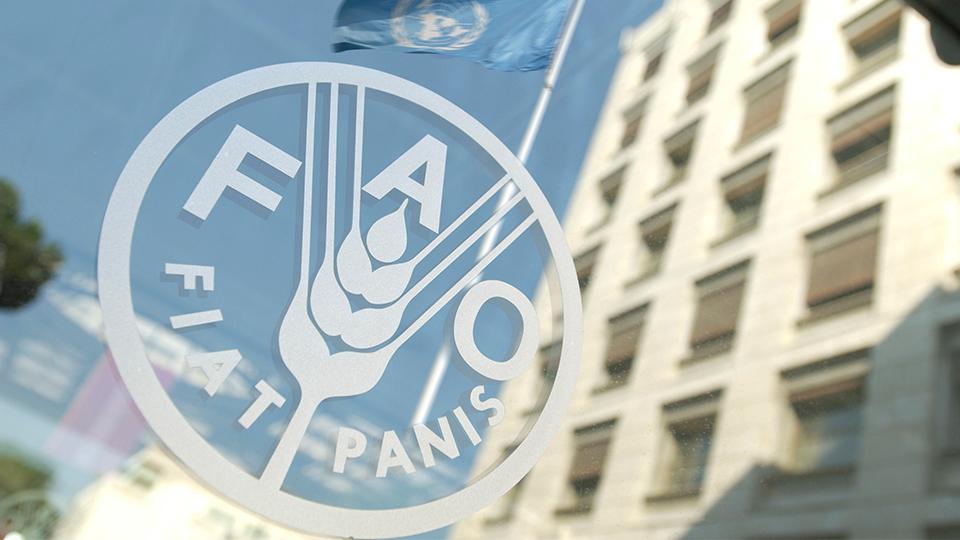 FAO-ONU